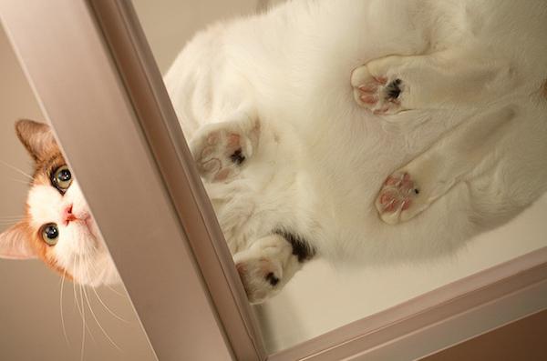 Squishy Cat Reddit : 13 Smooshy Cats On Glass