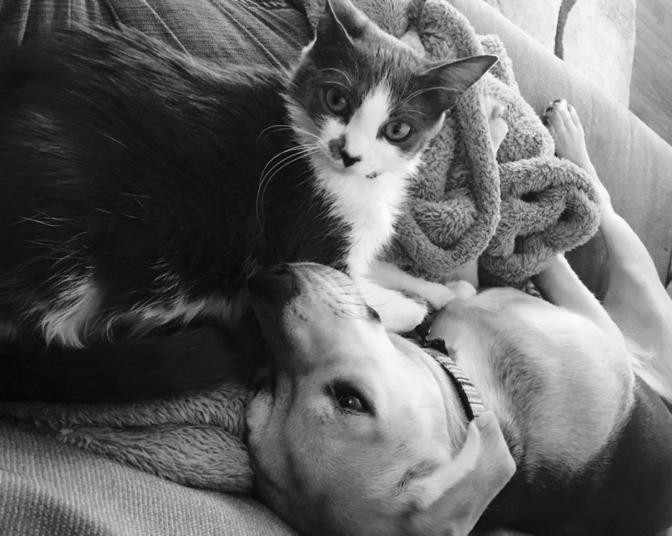 cat and beagle dog snuggling best friends