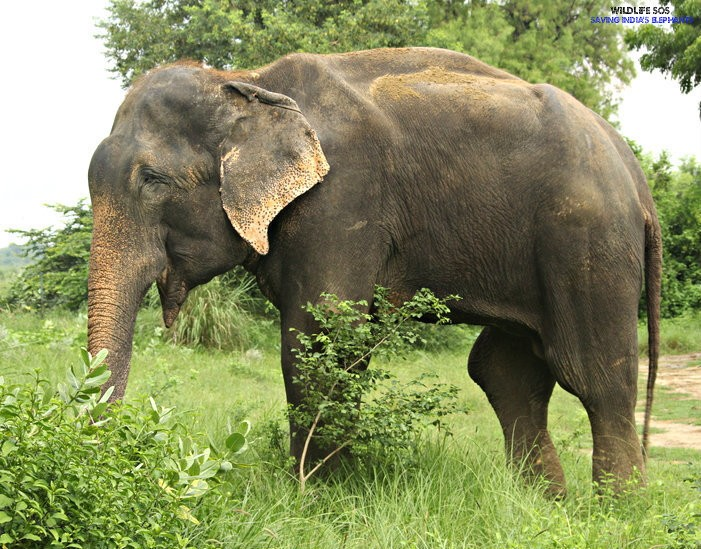 Elephant Who Wept Through His Rescue Officially Declared 'Free'