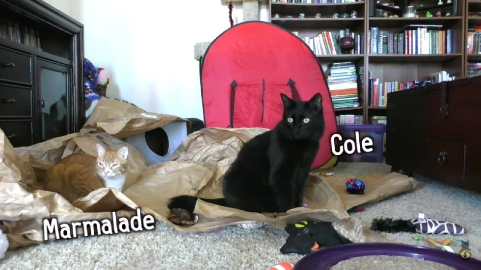 cole and marmalade home alone