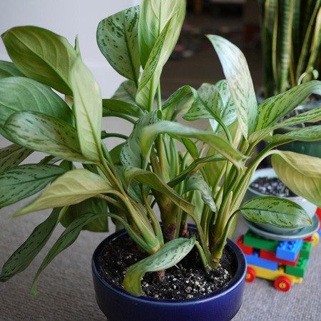 5 Plants That Help Purify Your Home One Country