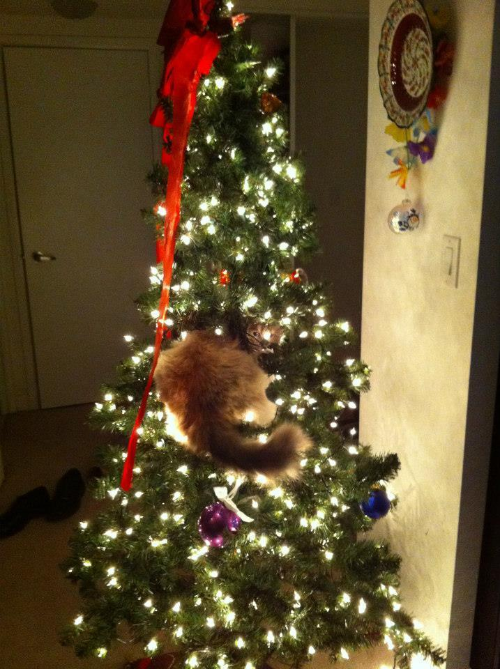 through golden eyes why a christmas tree is not the best idea for some of us - Reddit Christmas