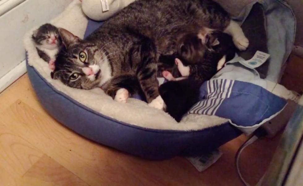 gatto selvatico accetta l'aiuto di soccorritori per i suoi bambini gattino neonato