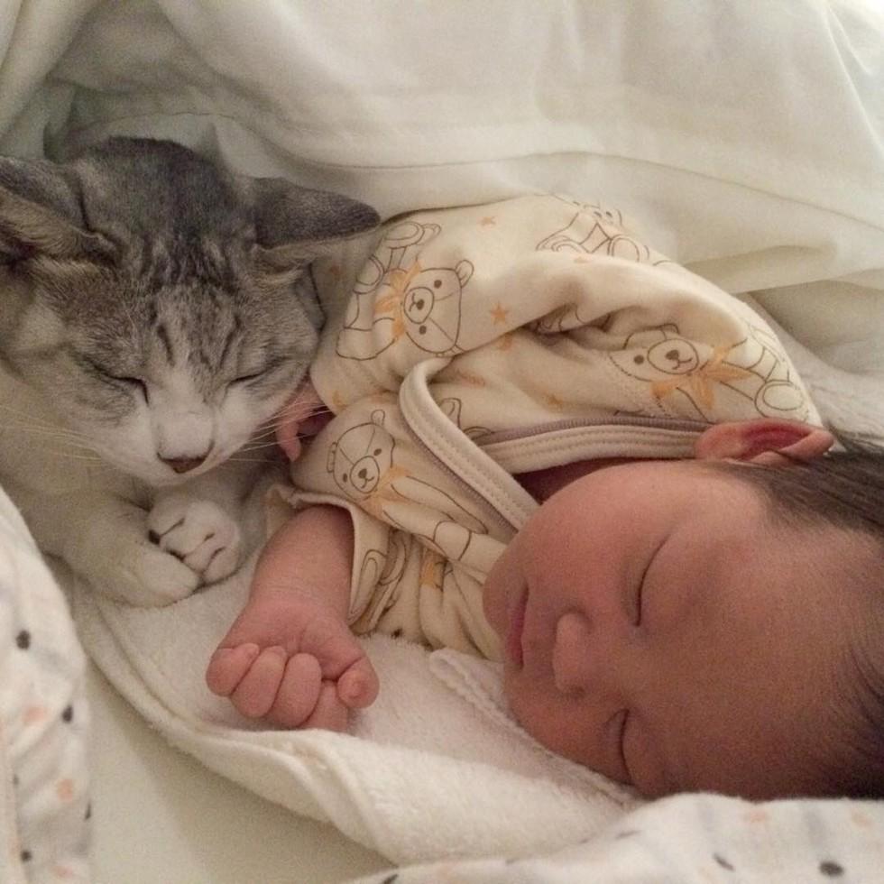 15 anni sorella guardie vecchio gatto bambino
