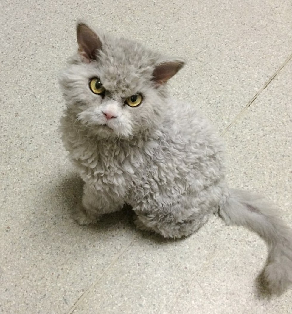 Frowning Kitty Has Ability To Stare And Glare Without