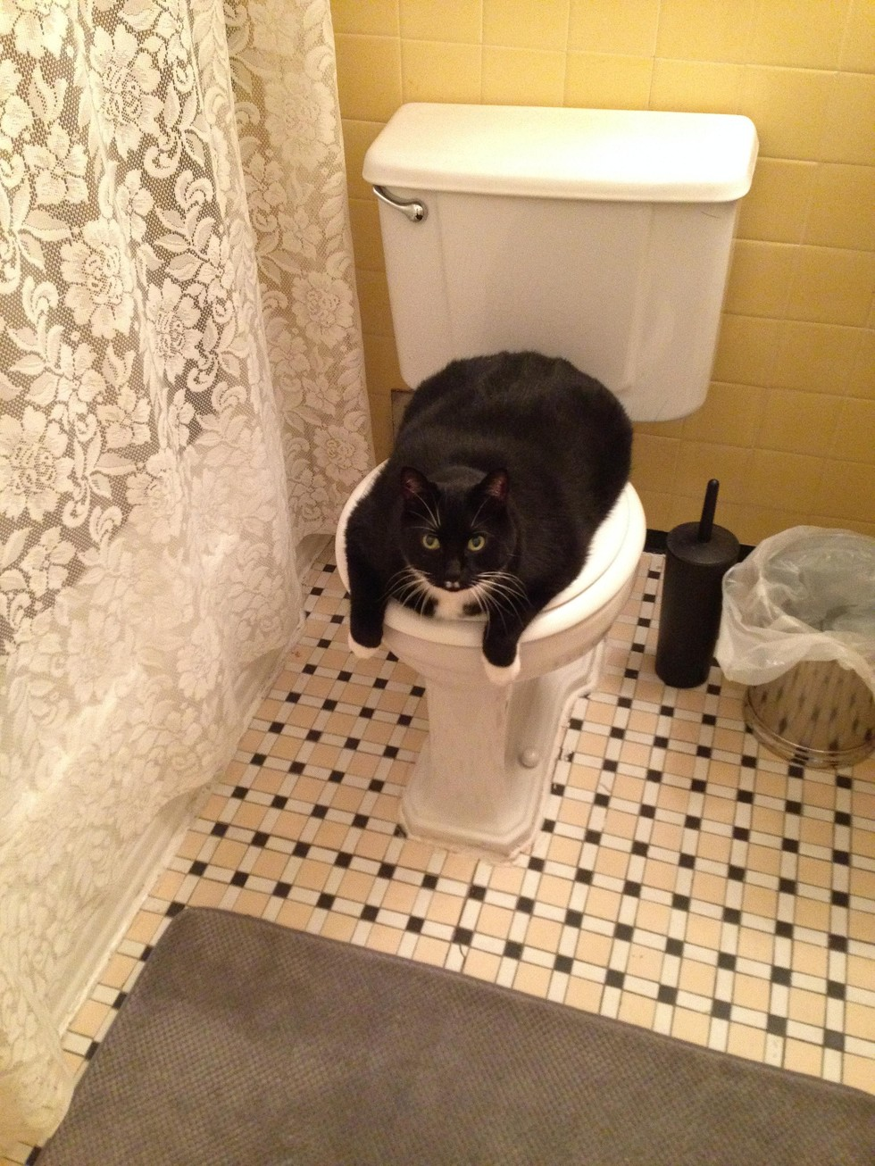 10 smug cats who they re actually in charge