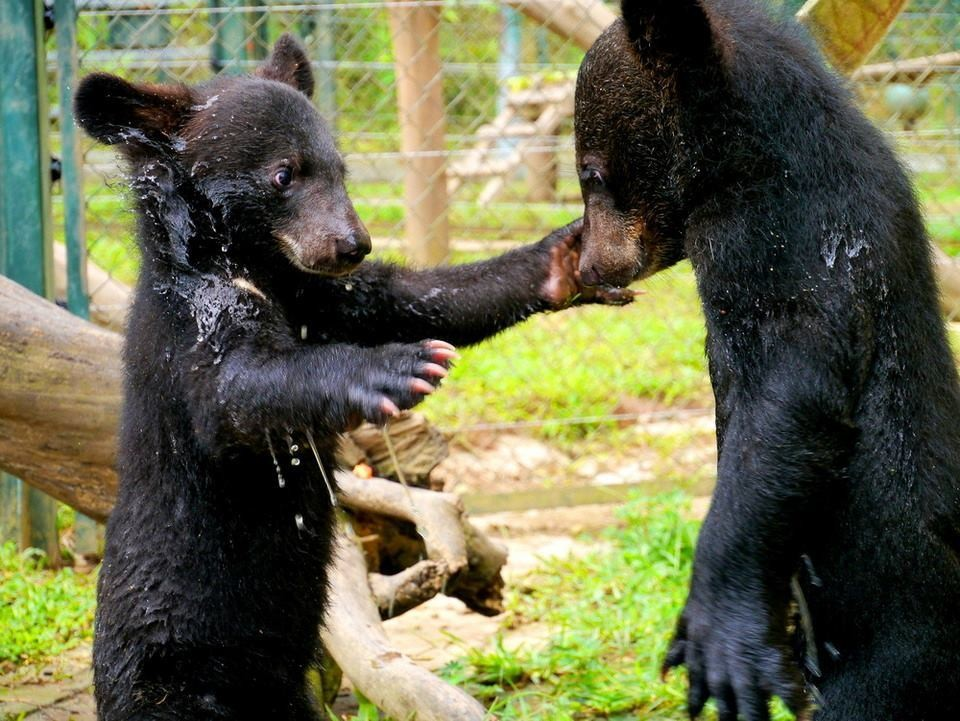 Baby Bear's Life Just Went From Bleak To ADORABLE
