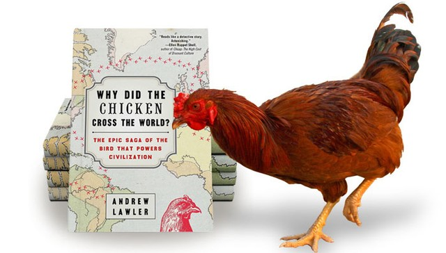 community united poultry concerns woman chicken about