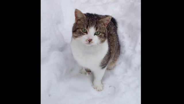 Adventurous Cat Has A Blast Leaping Through The Snow