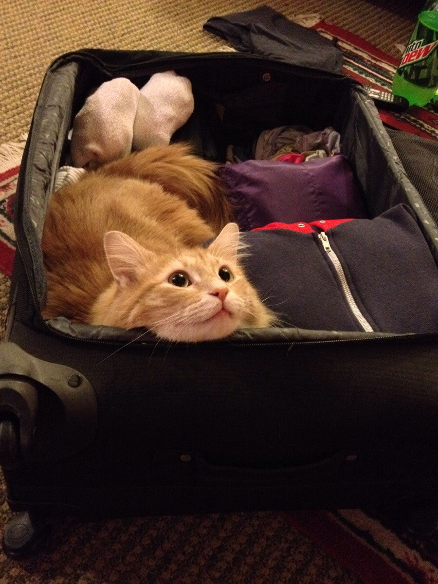 17 Pets Who Can 39 T Believe You Aren 39 T Taking Them On Your Trip