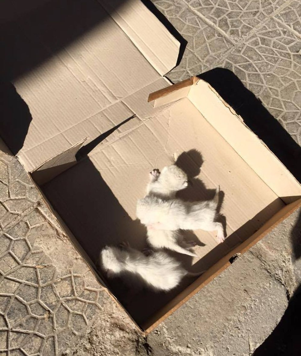 Woman Finds 3 Helpless Kittens On The Street And Gives