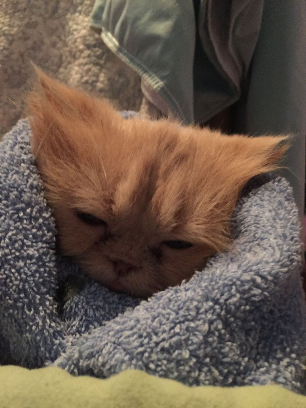 Persian cat stopped eating