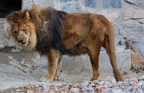 The Worst Zoos On The Planet