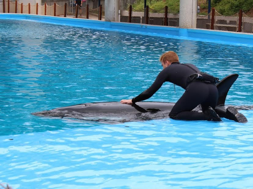 Incidents At Seaworld Parks: Another Orca Gets Beaten Up At SeaWorld