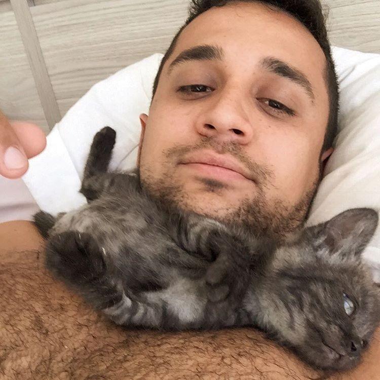 cat training videos