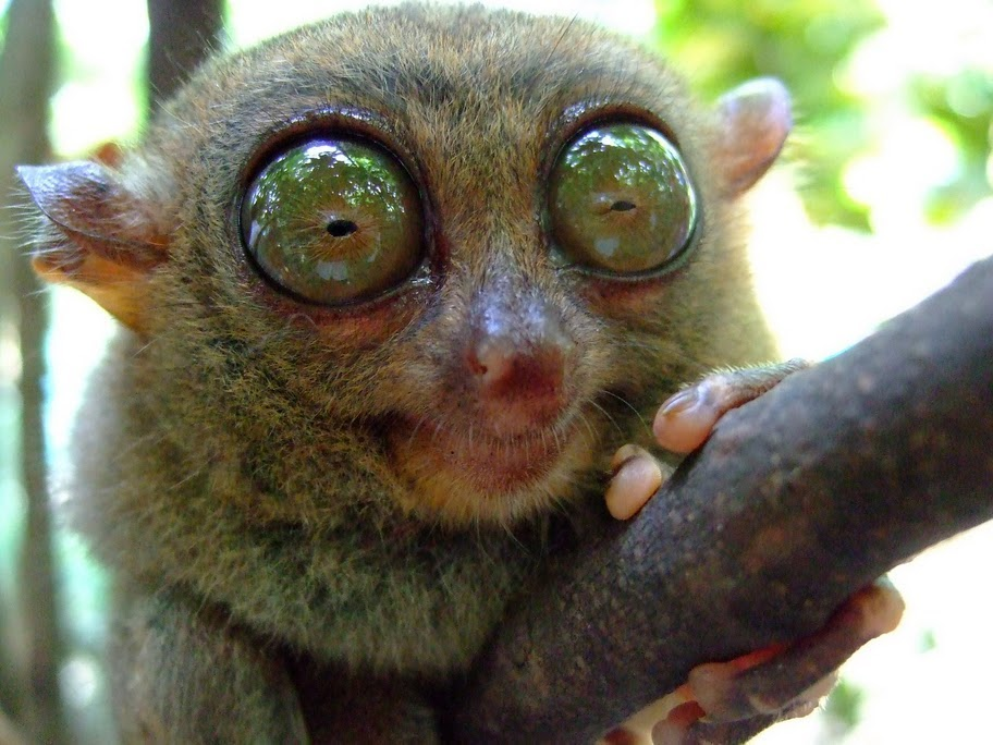 11 Animals With The Coolest-Looking Eyes On The Planet