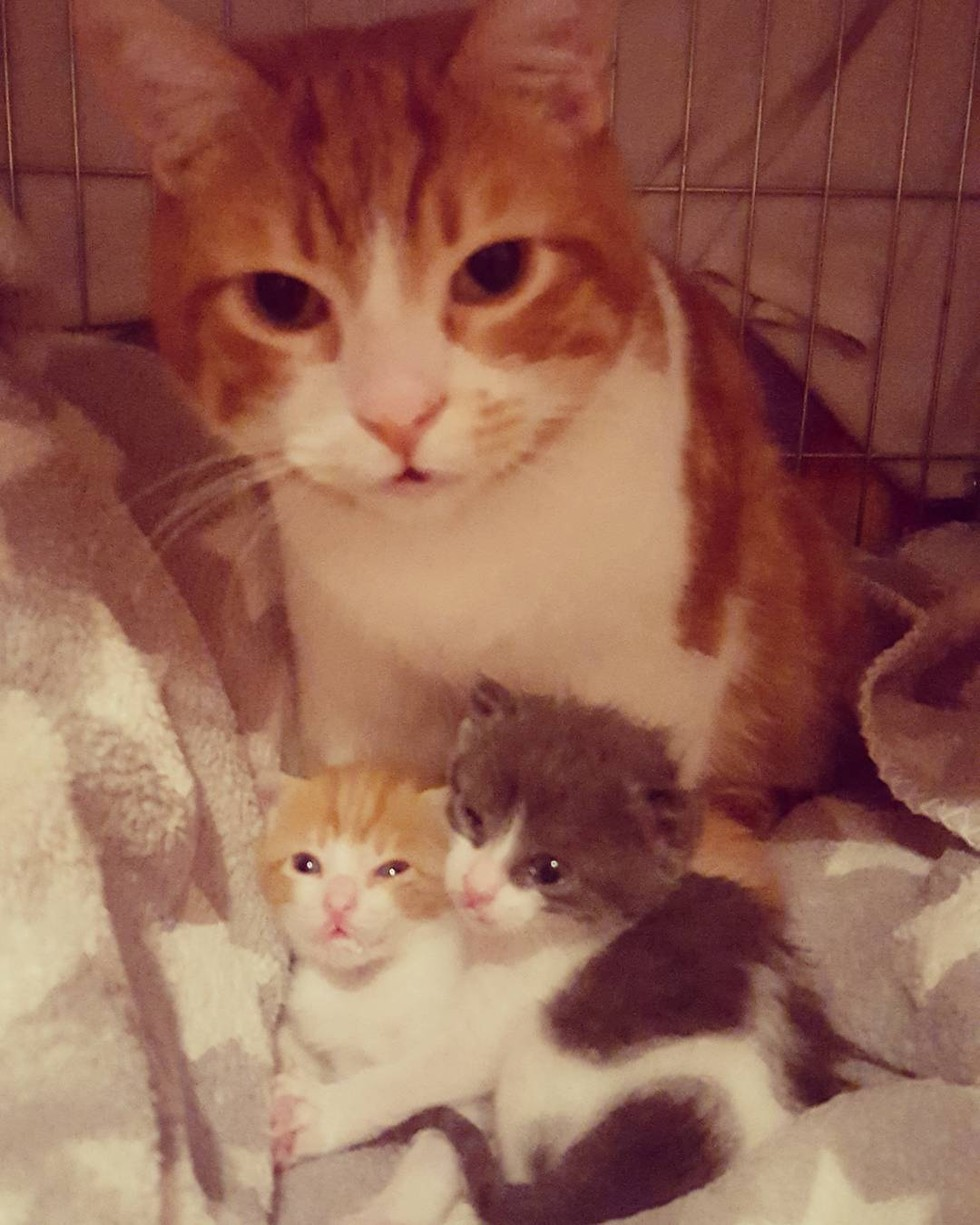 cat needs chemotherapy continues caring for orphaned kittens