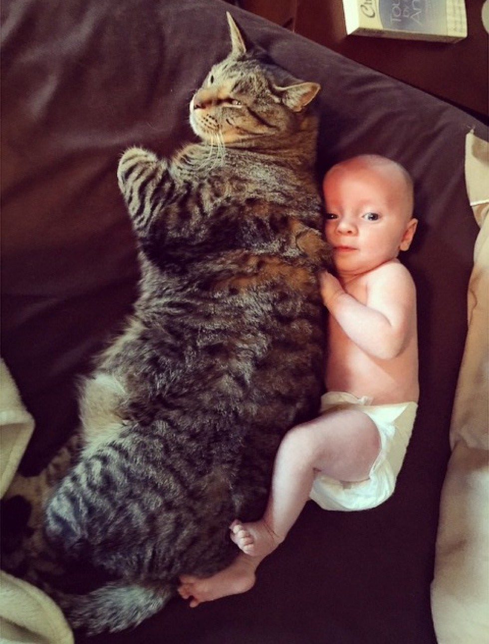 newborn baby boy and tabby cat
