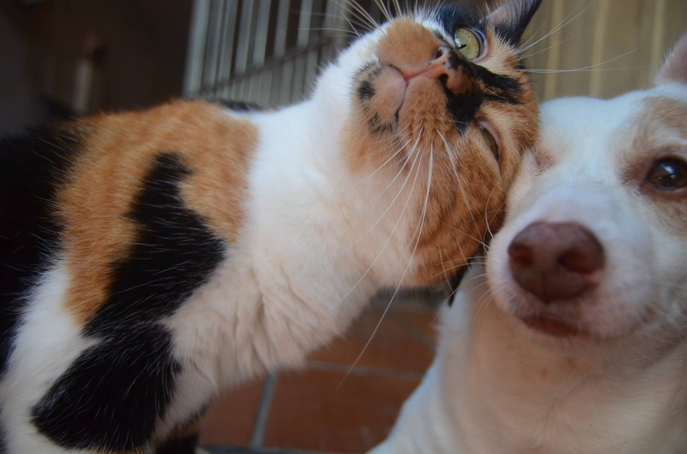 calico cat snuggles dog love