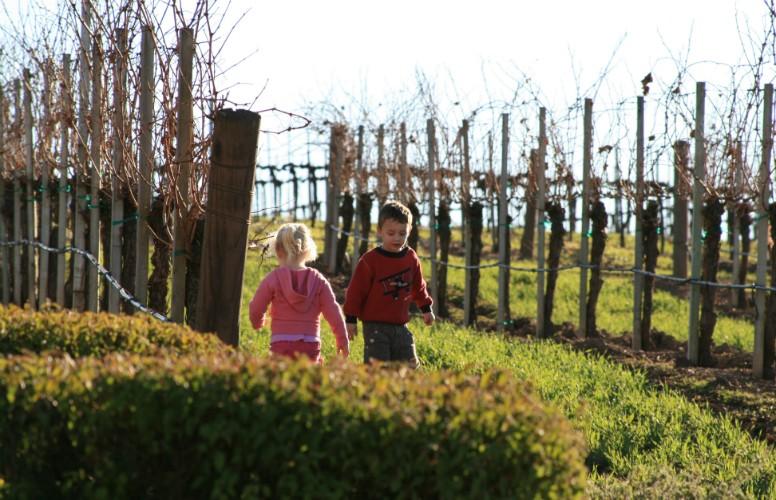 Santa Barbara Vineyards