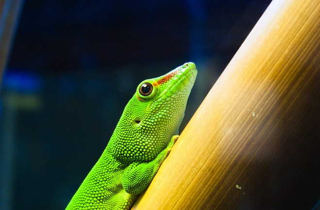 nanoscale adhesive inspired by the gecko essay