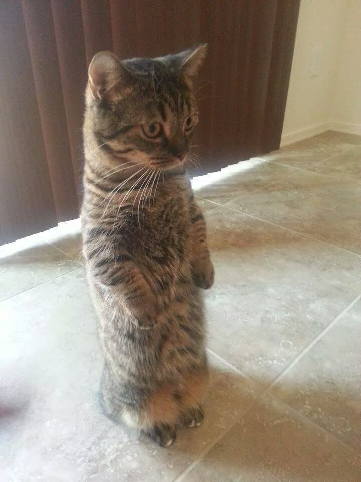 Cats Like Cat Stands