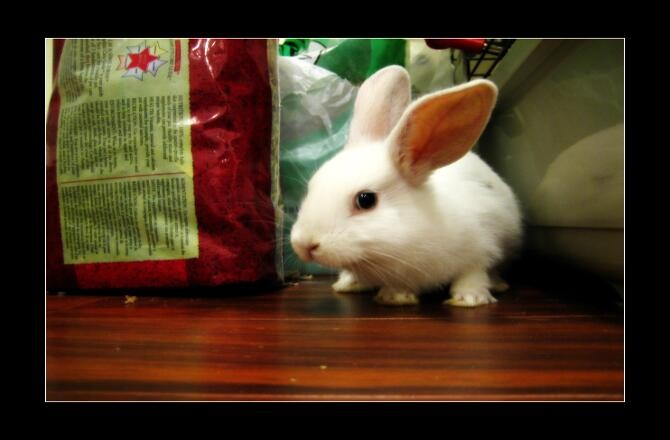 Where Did The Easter Bunny Come From? | Mental Floss