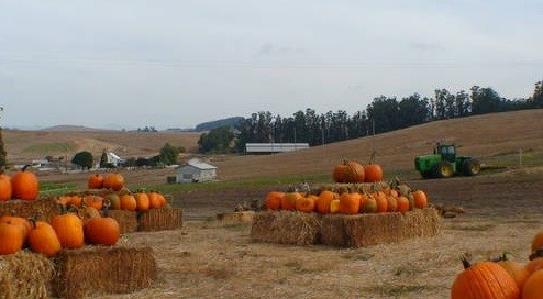 Top pumpkin patch bay area