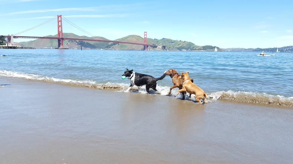 Best Dog Parks Sf