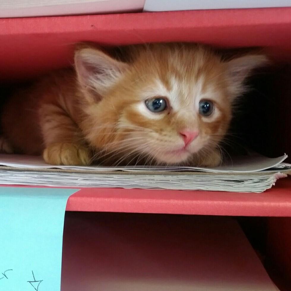 Spca Kittens