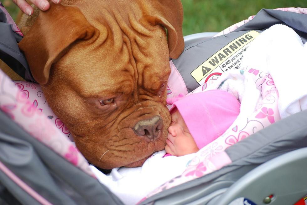 Risultati immagini per dogs and babies