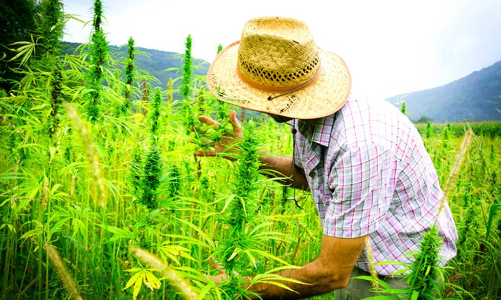 Hemp offers real sustainable solutions to our earth-killing practices – Ministry of Hemp