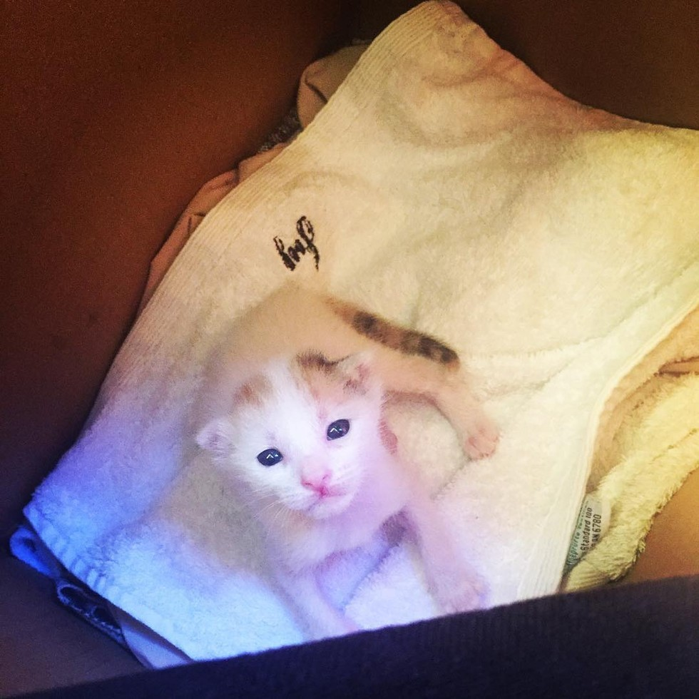 cat ancestry dna test