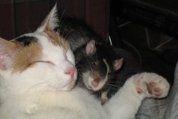 domesticating feral cat
