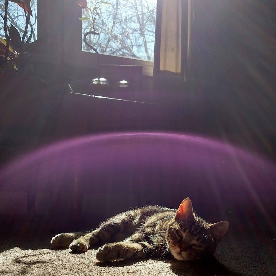 12 Cats Who Are Secretly Superheroes Meowingtons