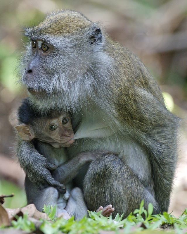 Mysterious Facility Looks To Sell Baby Monkeys For Use In