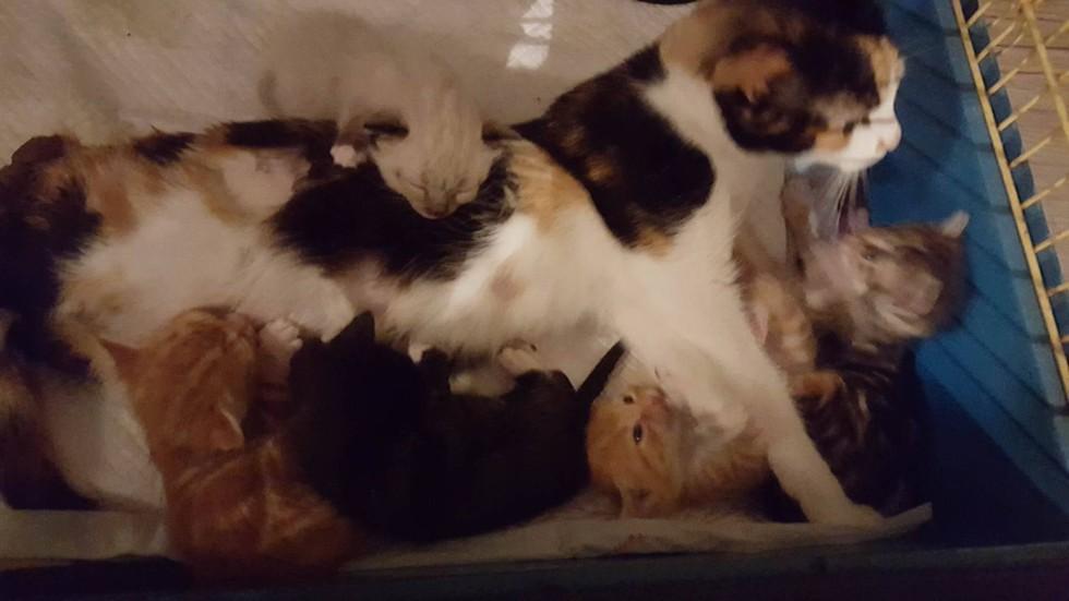 Cat Rescue Weston