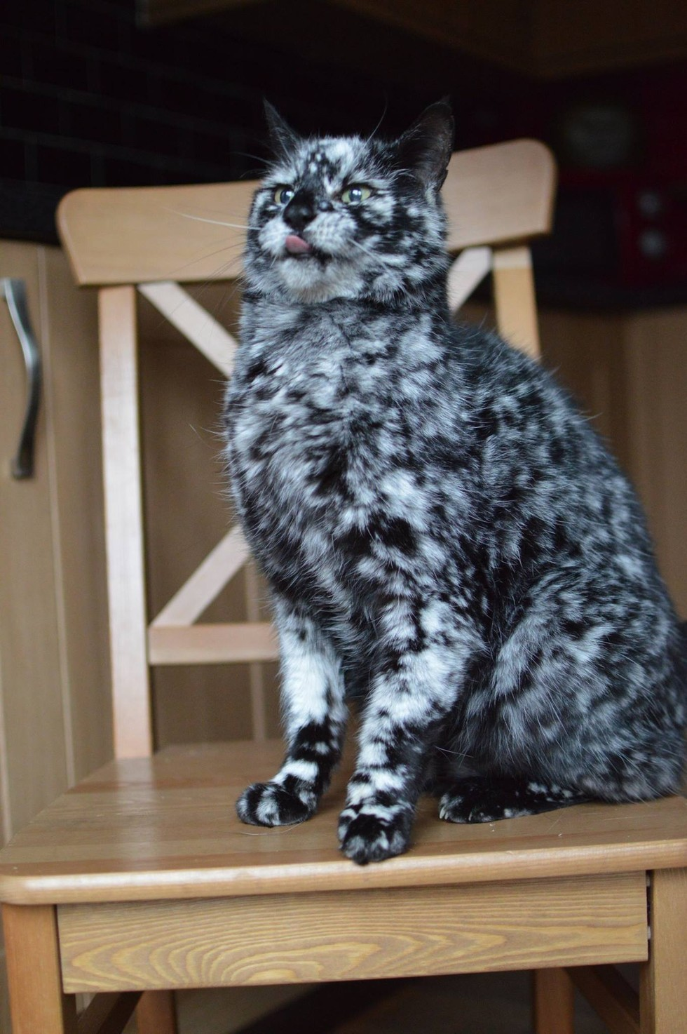 Black Cat Changing Color Due To Skin Condition Is Truly