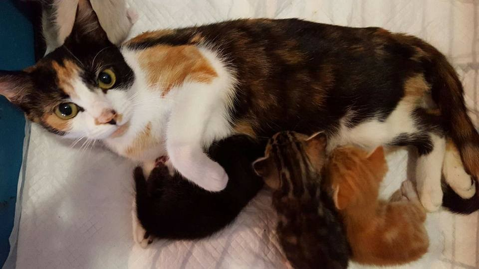 Momma Cat Protects Kittens From Dog