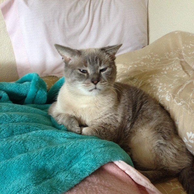 15 Cats Who Have Serious Morning-Face Right Now