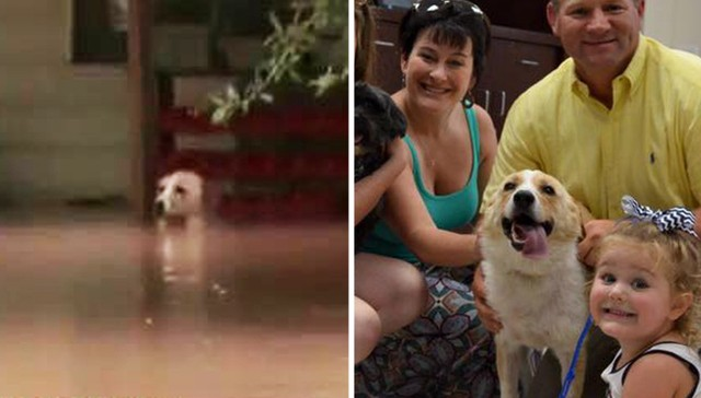 Texas flood dog rescue
