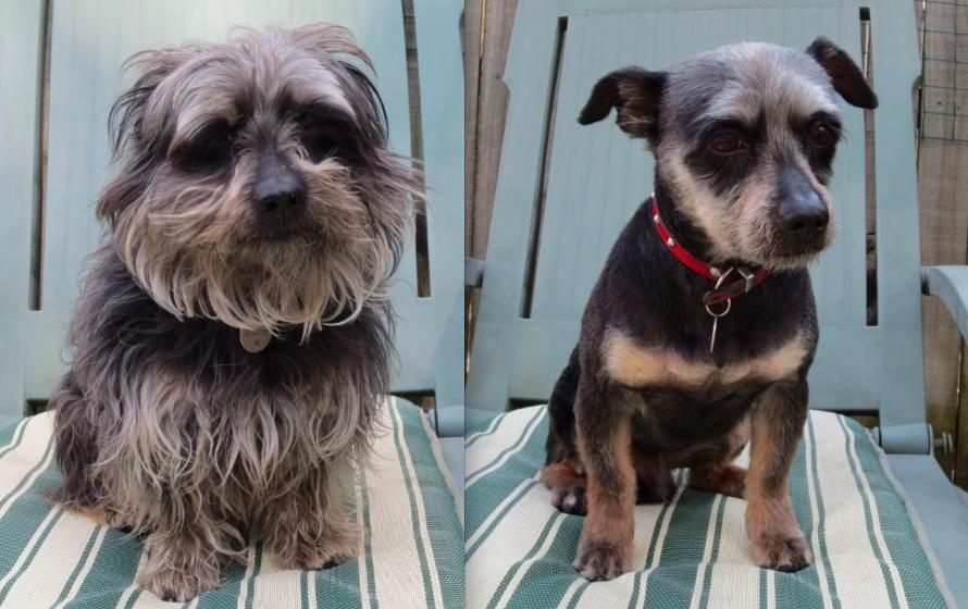 15 Dogs Before And After Their Spring Haircuts