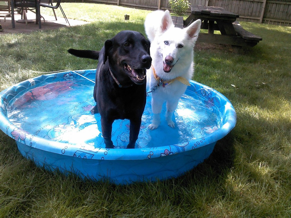 18 Dogs Who Are Straight Chillin In Their Kiddie Pools