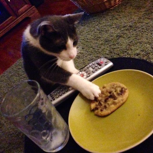 My Cat Steals Food