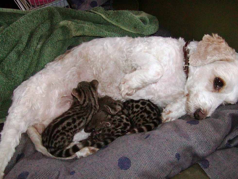 Dog Loves Her Adopted Babies So Much She Starts Producing