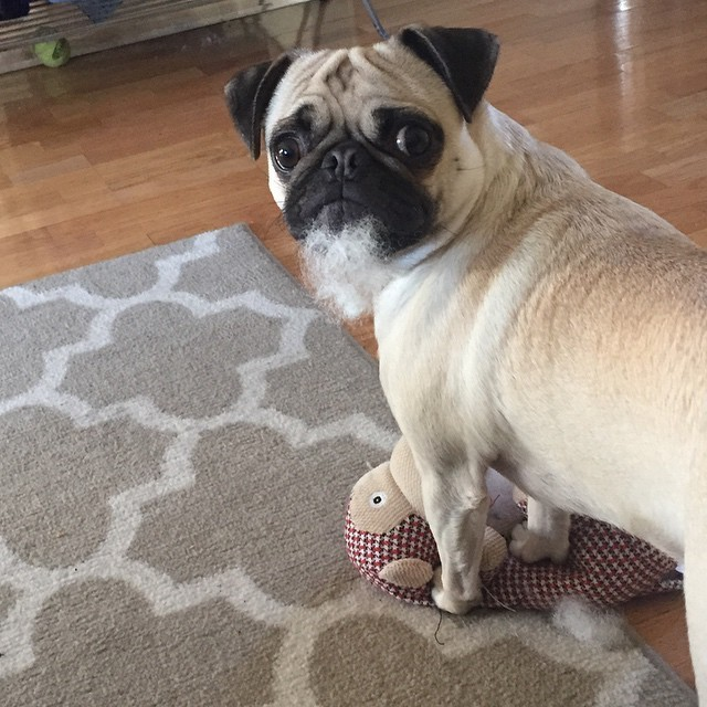 14 Dogs Who Didn T Mean To Destroy Their Stuffed Animals