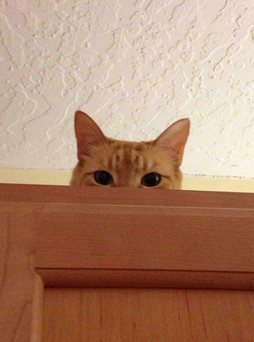 Resultado de imagen para pets watching you gif