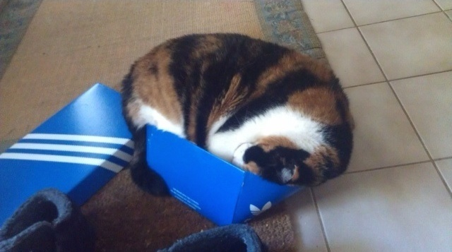 Bilderesultat for cats i to small boxes