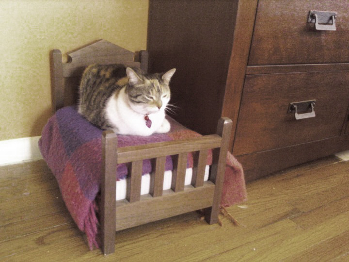 Why Do Cats Steal Dog Beds