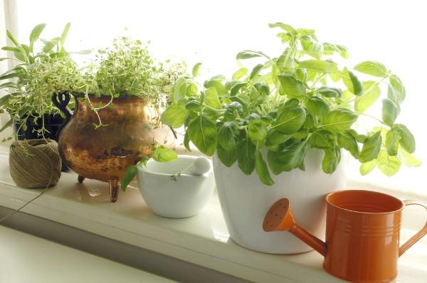 How to Create Your Indoor Edible Garden EcoWatch